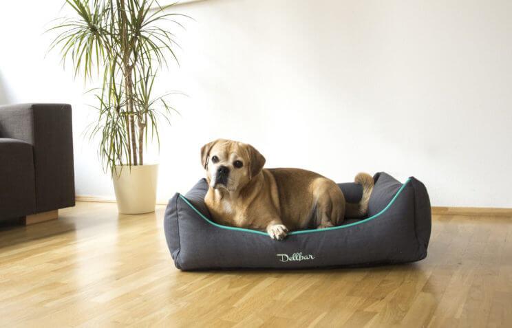 Dellbar Ortho Hundekorb Anthrazit im Raum.jpg