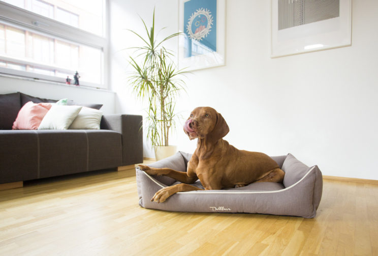Dellbar Ortho Hundekorb Hellbraun im Raum.jpg